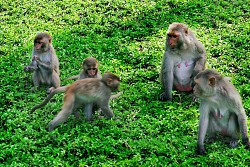 Monkey Island and Doc Lech Beach full day Tour
