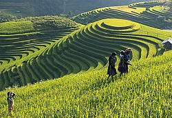 Sapa Trekking Tour 2Days/3Nights Daily Departure
