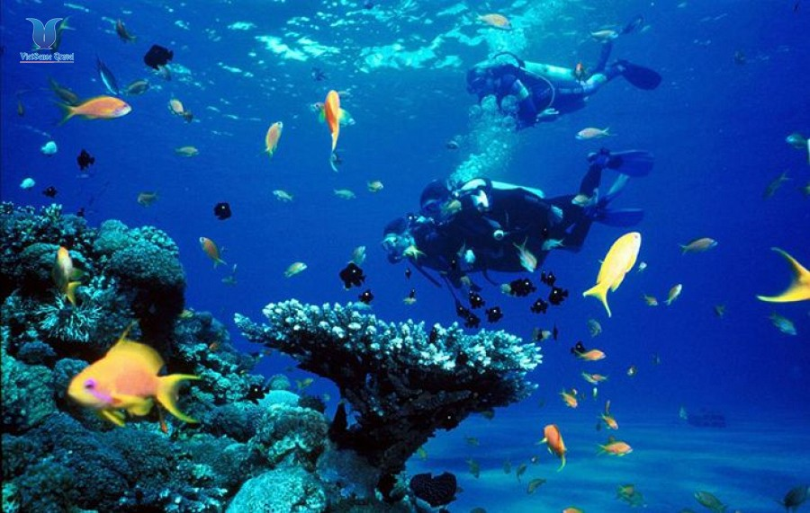 Islands and Snorkeling full day Tour